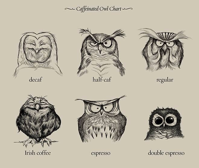 Kaffee-Eulen
