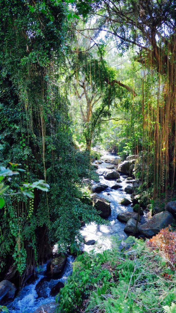 Bali Natur