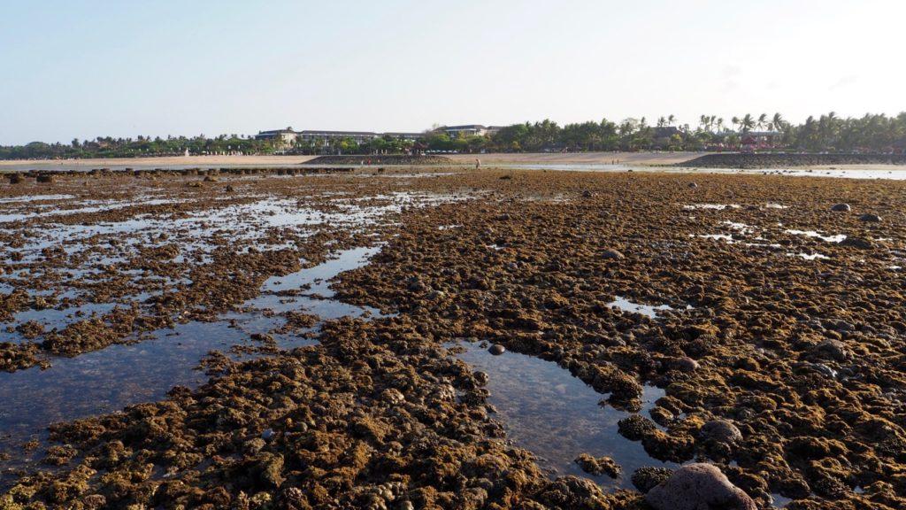 Sofitel Bali Nusa Dua Beach